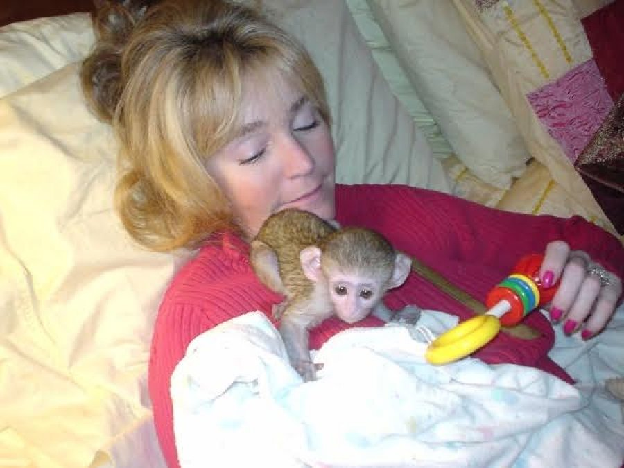 Cute And Lovely Baby Capuchin Monkeys For Adoption Offer