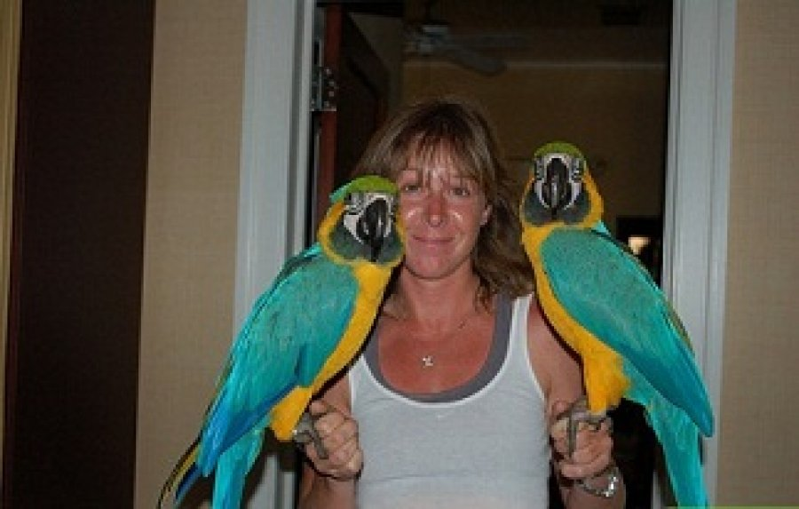 Talking Blue and Gold Macaws for free adoption offer Macaws