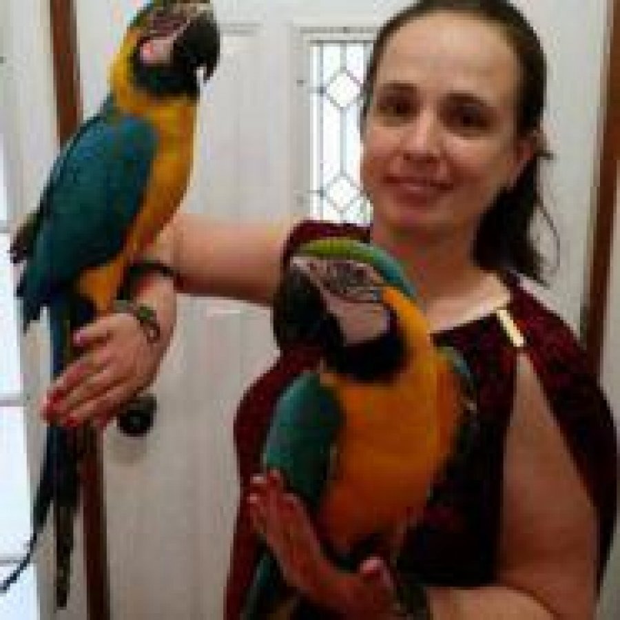 blue and gold macaw for free adoption offer Macaws