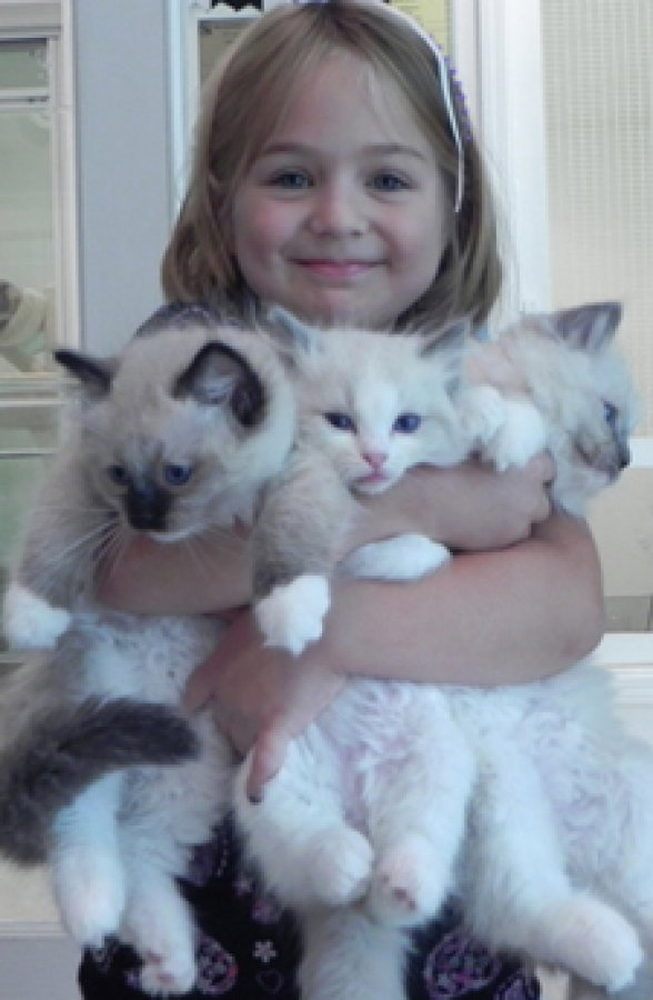 Beautiful Ragdoll Kittens Available for sale. offer Cats & Kittens